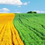 Agroenergetyka - pomysł na dochodowy biznes