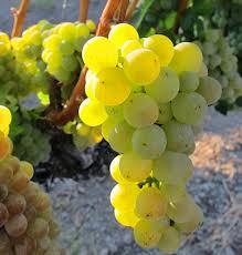 winnice-w-polsce