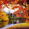 Dlaczego liście zmieniają kolor i spadają z drzew jesienią?