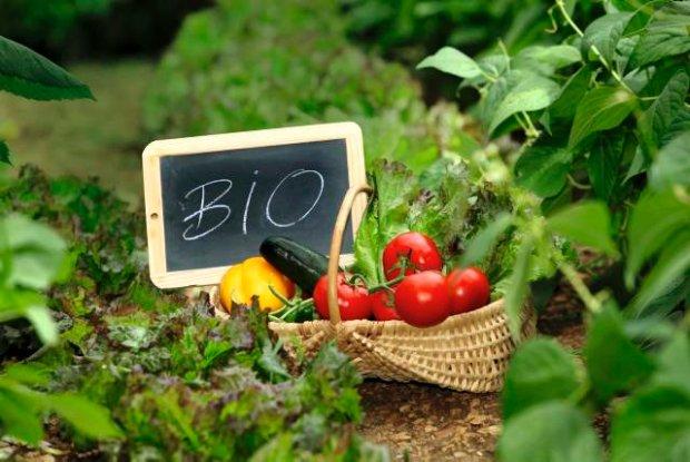 zywnosc eko i bio