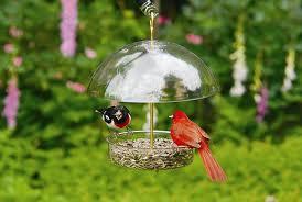 dokarmianie-ptakow