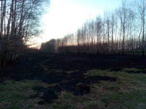 wypalanie traw kary i co za to grozi