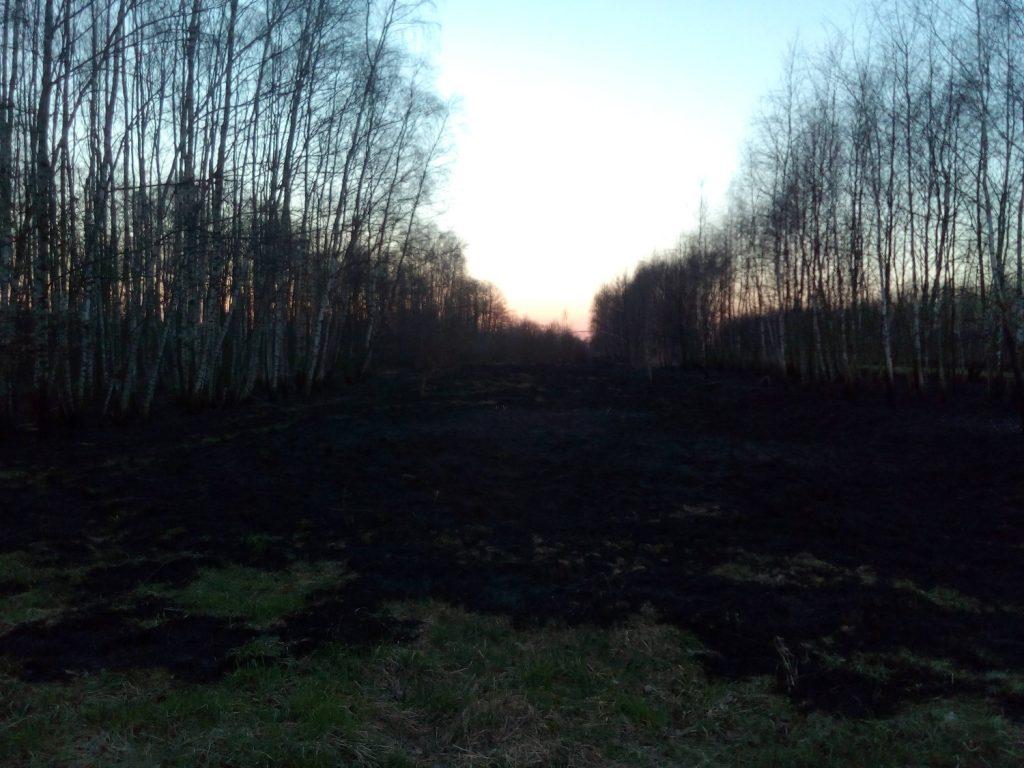wypalanie traw - wady i zalety