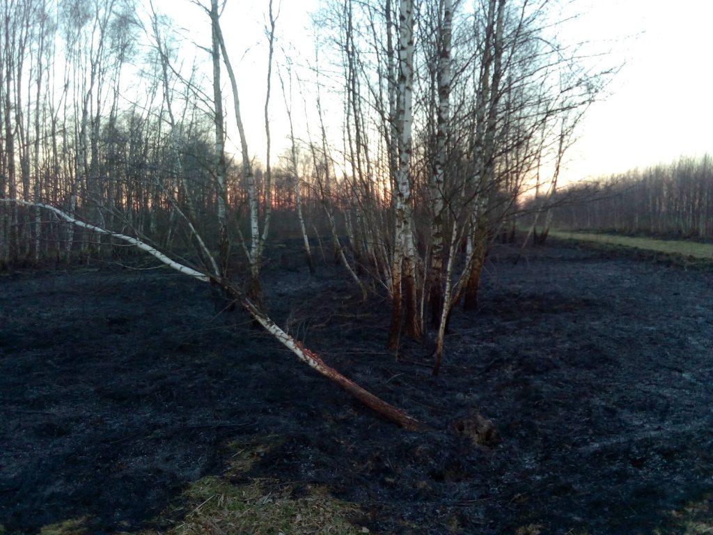 wypalanie traw na terenach rolnych konsekwencje